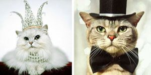 9. Hellcat et Brownie (chats) : 4.1 millions