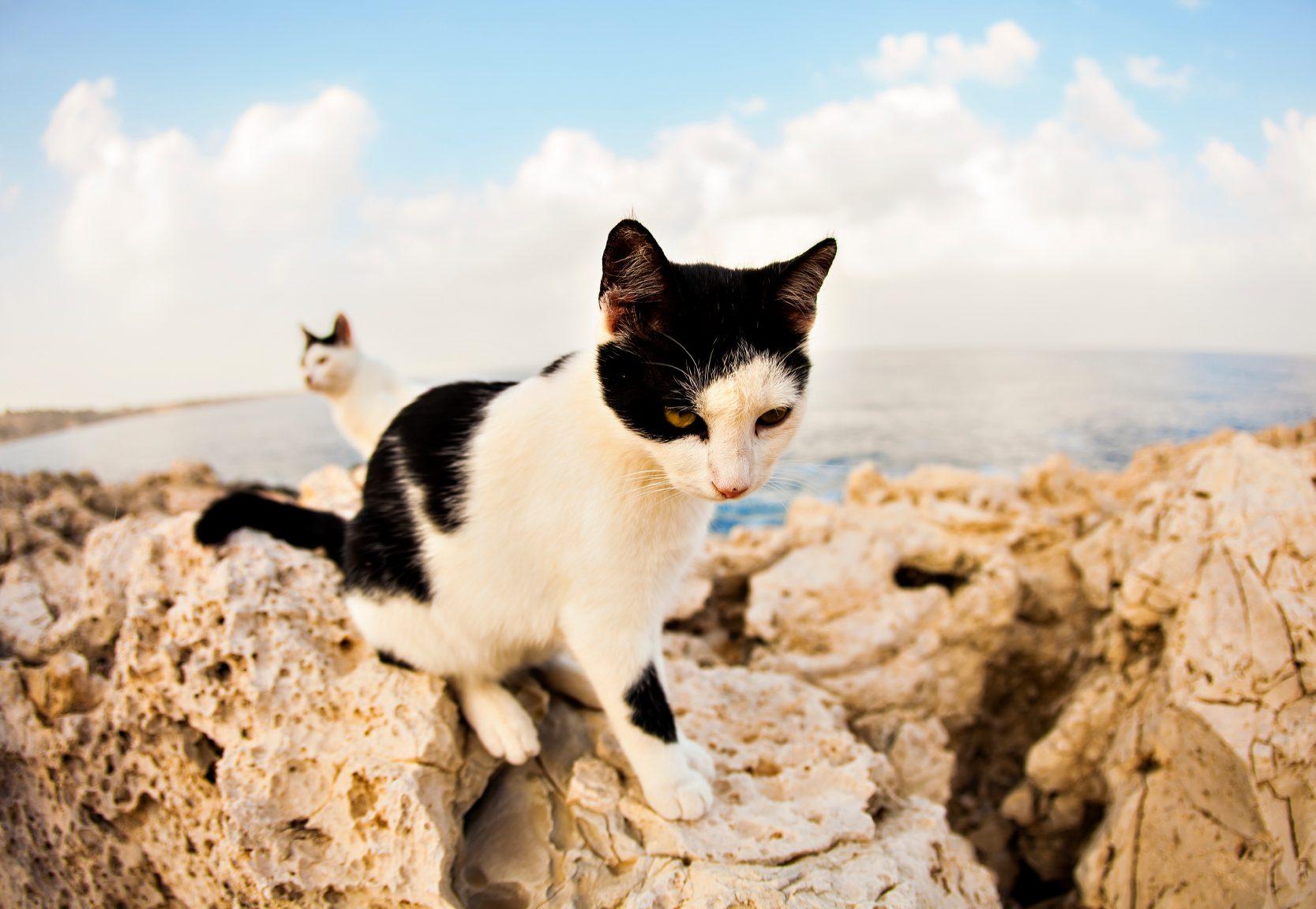 10. Le ronronnement des chats demeure un mystère