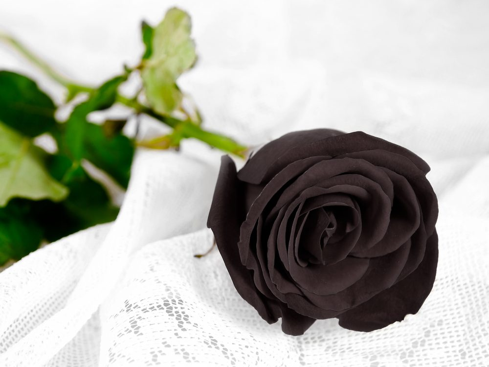 The black rose means the loss and the lack