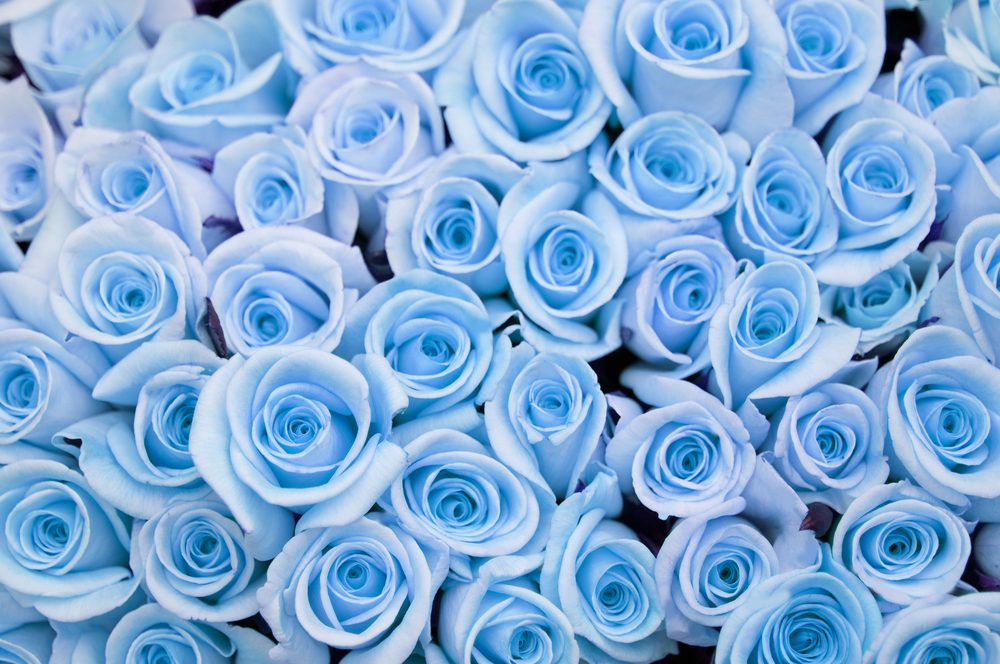 Blue roses to signify the dream and the inaccessible