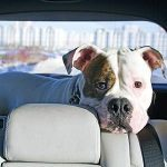 4 articles essentiels pour voyager avec votre animal