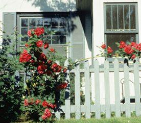 5. Plantez des arbustes