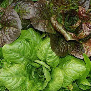 Salade à tondre