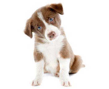 Un filet de sécurité pour votre animal préféré