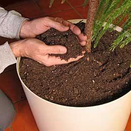 3. Rempoter une plante d'intérieur