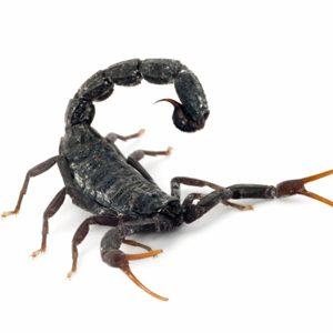 Scorpions: cibler le cancer