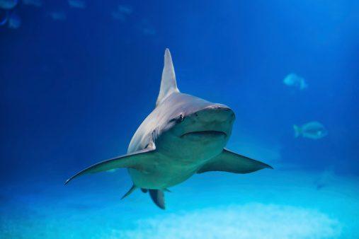 Alerte aux requins!