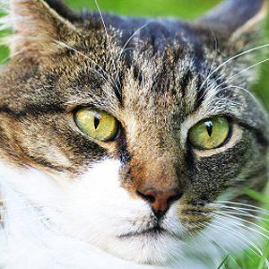 Indice #4: Des pupilles dilatées