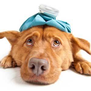 4 thérapies pour votre animal de compagnie