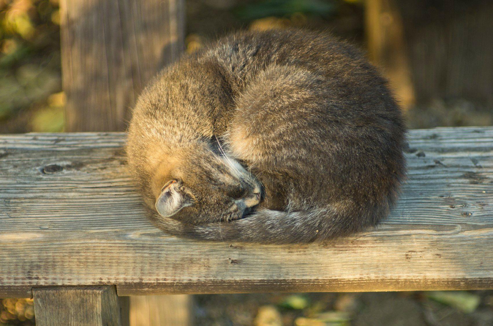 5. Les chats ne sommeillent pas toujours