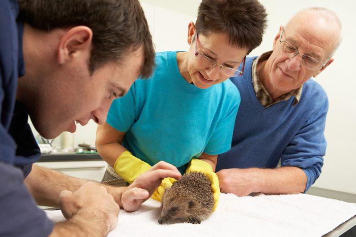 Faites un suivi régulier sur la santé de votre animal