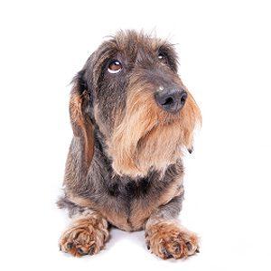 2. Le chien peureux