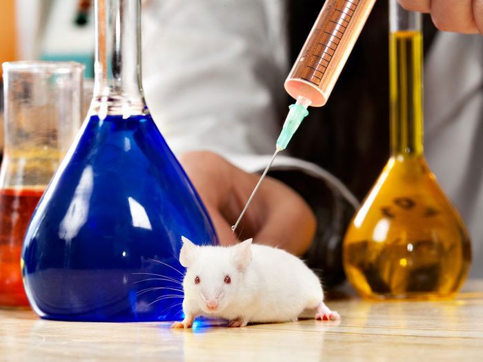 Les tests sur les animaux ne sont pas chose du passé