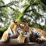 10 zoos les plus incroyables au monde