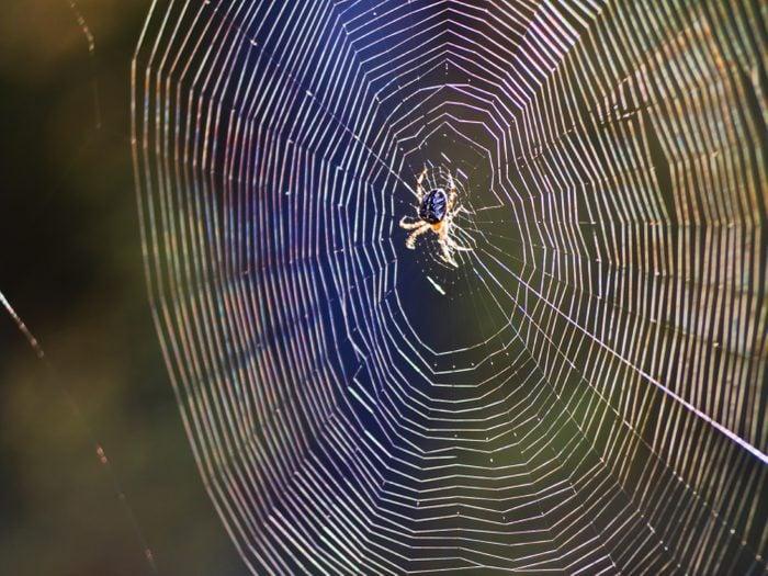 Biomimétisme: d'ingénieuses inventions inspirées par la nature!