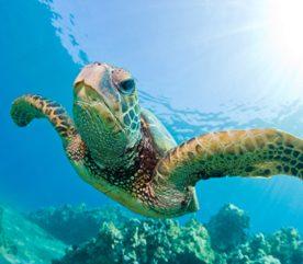 3. Vacances écologiques participatives