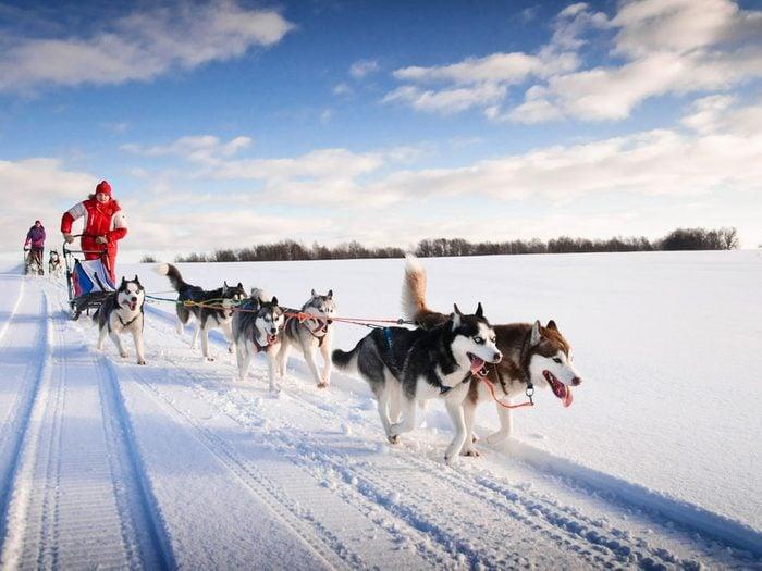 Le selfie en région sauvage: une randonnée en traineau de chiens au Canada