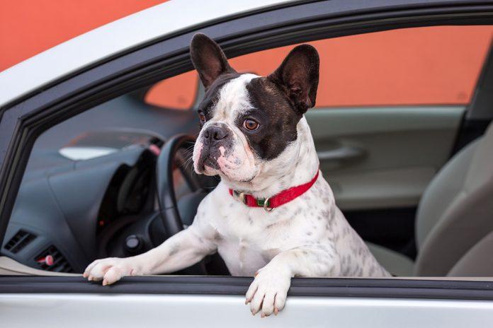 17. Nettoyer les poils d'animaux dans la voiture avec des gants de caoutchouc