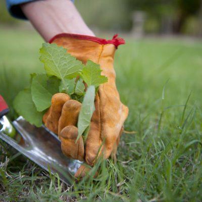 Éliminer les mauvaises herbes: nos 17 meilleurs trucs maison!