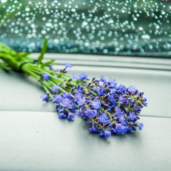 4 trucs inusités pour rafraîchir la voiture