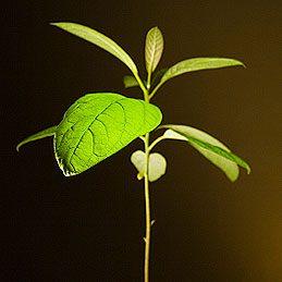 Protéger les jeunes plants