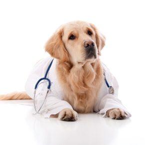 Quels vaccins pour Fido?