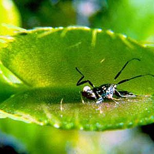 1. La Dionée attrape-mouches
