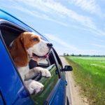 Votre guide pour mieux voyager avec votre animal