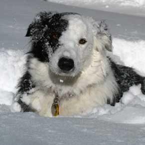 10 conseils pour protéger vos animaux de compagnie en hiver