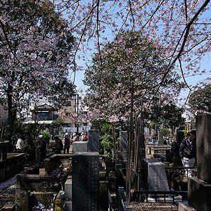 3. Le cimetière de Yanaka