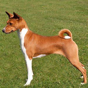 4. Un chien qui n'aboie pas