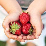 10 raisons santé de manger des fraises