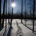 Remèdes naturels contre la dépression saisonnière (TAS)