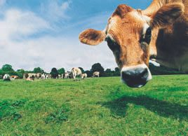 Qu'est-ce que l'intolérance au lactose?