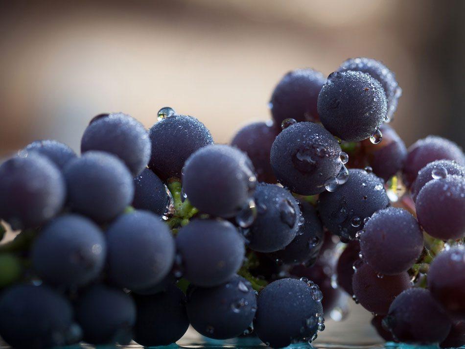 12 fruits et légumes anticholestérol