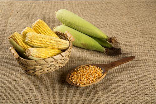 1. Le maïs