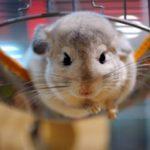 La vérité sur l'expérimentation animale