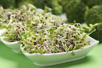 2. Pousses de brocoli