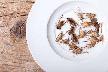 Les niveaux acceptables de poils de rongeurs et de parties d'insectes