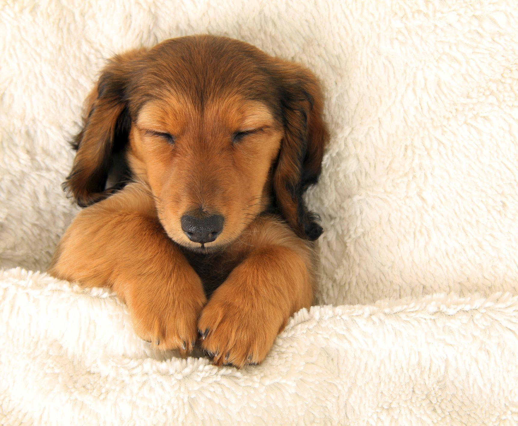 Quelle belle vie de chien !