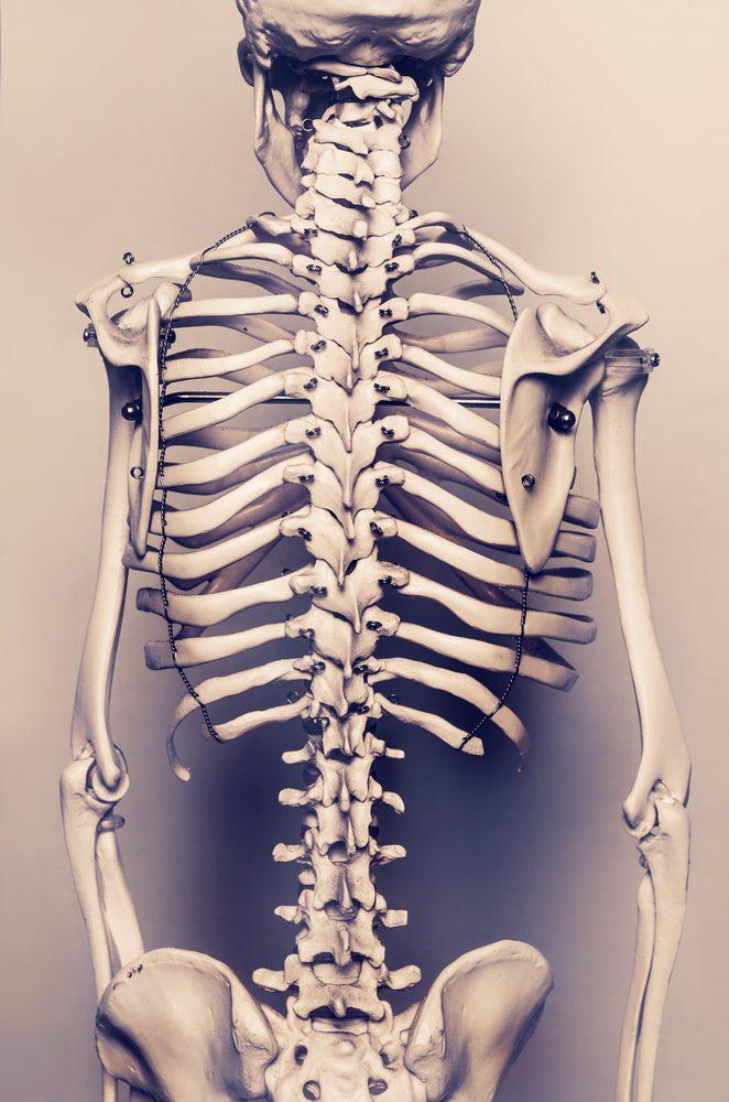 La colonne vertébrale