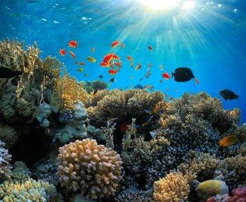 6. Protection des océans