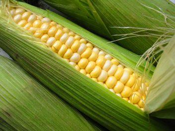 Plats d'accompagnement: Maïs et pommes de terre