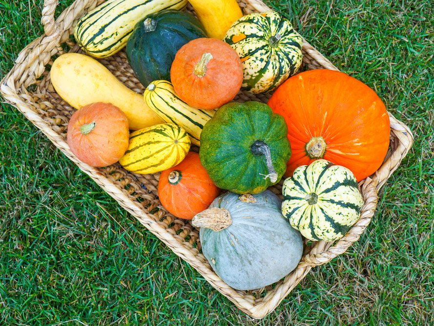 15. Courges d'hiver