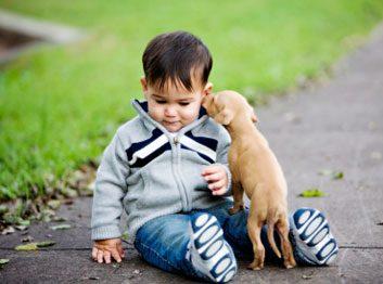 Un animal de compagnie peut protéger les fonctions respiratoires chez l'enfant.