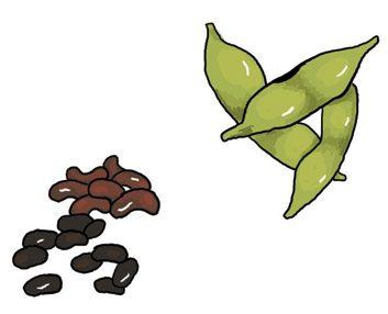 Le classique: les haricots secs ou haricots noirs. La nouveauté: l'edamame.