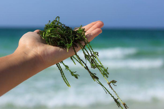 Recherches récentes sur les algues