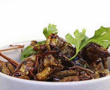 Les insectes deviendront-ils une nouvelle source de nourriture énergétique ?
