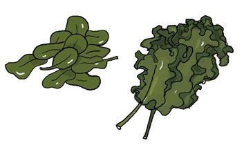 Le classique: les épinards. La nouveauté: le borécole