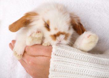 Un animal de compagnie peut réduire le risque de dépression.